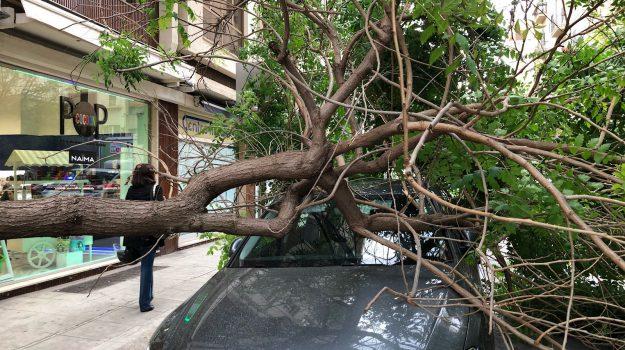 albero su auto a palermo, meteo sicilia, Palermo, Meteo
