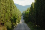 Cipressi lungo il viale che collega San Guido a Bolgheri, in Toscana