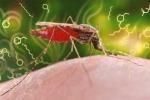 Il parassita della malaria altera l'odore delle persone infettate, rendendolo più attraente per la zanzara Anofele, vettore della malattia (ETH Zurich / CDC, James Gathany)