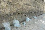 Cani avvelenati a Mazara del Vallo: l'Enpa denuncia sui social l'accaduto