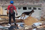 Il cane da soccorso diventa elettronico (fonte: Diveofficer/Flickr)