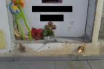 """Liquami dalle tombe a Mascalucia, il M5s: """"Emergenza igienico-sanitaria al cimitero"""""""