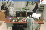 Nascondeva 300 grammi di marijuana e piantine in casa, arrestata a San Cataldo
