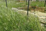 Erba alta e segnaletica sbiadita, le foto dal sito archeologico di Morgantina