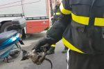 Gatto incastrato in auto a Palermo, salvato dai pompieri: le immagini da via Campolo