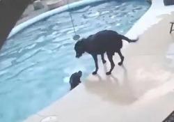 Smokey non sa nuotare e di solito si tiene alla larga dalla piscina di casa sua in Arizona