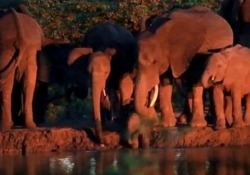 La scena ripresa nel Kruger National Park, in Sudafrica