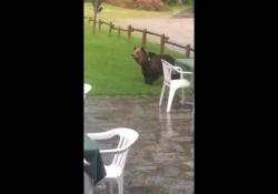 Un'orsa è stata avvistata nei pressi di un bar di un rifugio della Val di Genova, in Trentino