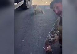 Il militare rinuncia al suo pasto per regalarlo all'animale affamato