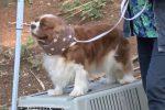 Esposizione internazionale canina a Palermo: 1250 iscritti di 150 razze