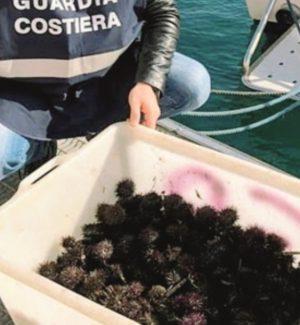 Pesca illegale a Favignana, sequestrati 400 ricci di mare