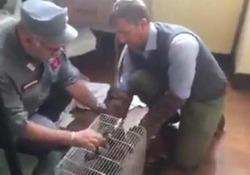 L'intervento di forestali e volontari nell'albergo ai Parioli dov'è stato scoperto l'esemplare