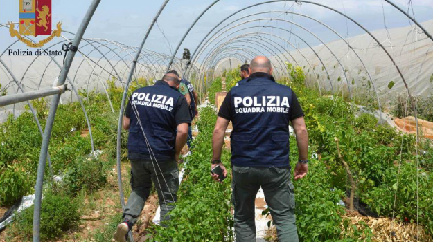 cannabis vittoria, Ragusa, Cronaca