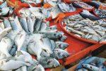 Valderice, sequestrati 15 chili di pesce privo di tracciabilità