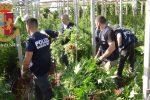 A Vittoria scoperte 6 tonnellate di cannabis nascoste nei campi di pomodorini
