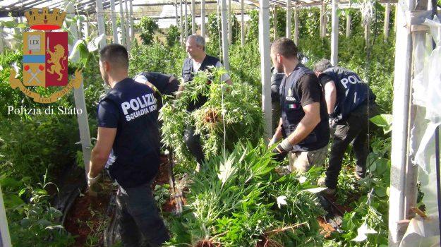 cannabis, DROGA VITTORIA, Ragusa, Cronaca