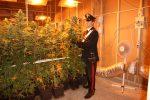 Palermo, una falegnameria diventa serra di marijuana: le immagini da via Chiavelli