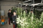Palermo, scoperte due serre di marijuana a Belmonte Chiavelli e Bonagia: arrestato