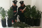 Droga in casa e una serra con 11 piante di marijuana, arrestato un 38enne a Bolognetta