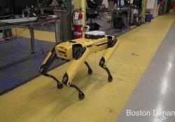 L'automa a form,a di cane della Boston Dynamics viene