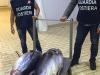 Pesca illegale a Portopalo, sequestrati due esemplari di tonno rosso