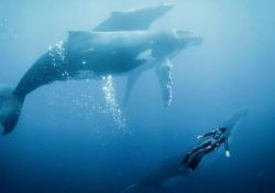 In anteprima immagini tratte da «Anote's Ark», «Blue» e «The Ancient Woods», tre dei film in concorso dal 31 maggio al 5 giugno