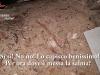 Blitz al cimitero di San Martino delle Scale, indagato anche un sacerdote