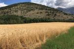 Fao, in aumento a maggio prezzi materie prime agricole