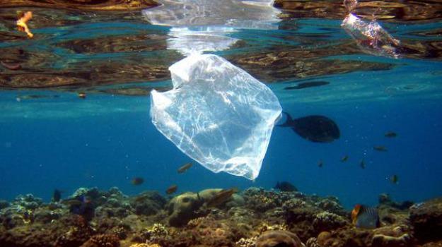 mozione Plastic Free Trapani, Trapani, Politica