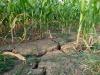 Scoperti batteri che aiutano le piante a resistere alla siccità (fonte: Pixabay)
