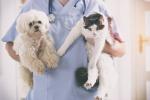 Un veterinario durante una visita