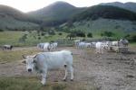 Brambilla, basta campagna per carne bovina, è cancerogena