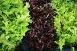 Centrale Latte d'Italia, accordo con Zerbinati per insalate