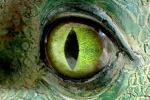 I genetisti escludono la possibilità di clonare i dinosauri: il loro Dna è troppo antico. jurassic World non potrebbe mai esistere