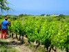 Pesticidi, verso giro di vite della Ue sul verderame