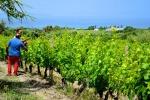 Il calo soprattutto in Calabria e Campania