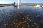 Acquacoltura, Parlamento Ue chiede etichetta trasparente