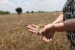 Magorno, Governo fermi speculazione sul grano in Calabria
