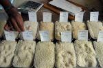 Nel Vercellese è nato riso 6+, previene malattie vecchiaia