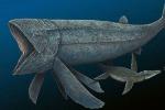Rappresentazione artistica del più pesce più grande e veloce finora noto. E' vissuto 165 milioni di anni fa ed era lungo oltre 16 metri. E' stato chiamato Leedsichthys problematicus (fonte: Maurilio Oliveira)