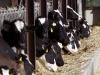 Antibiotici, accordo Ue su limiti a uso in mangimi medicati