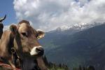 Latterie Alto Adige vietano uso di glifosato