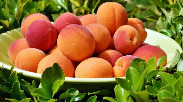 frutta estate uva senza semi, Sicilia, Società