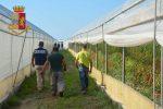 Romeni vittime di caporalato, la Cgil Ragusa si costituisce parte civile