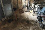 Animali maltrattati e rinchiusi in un lager, una denuncia a Noto
