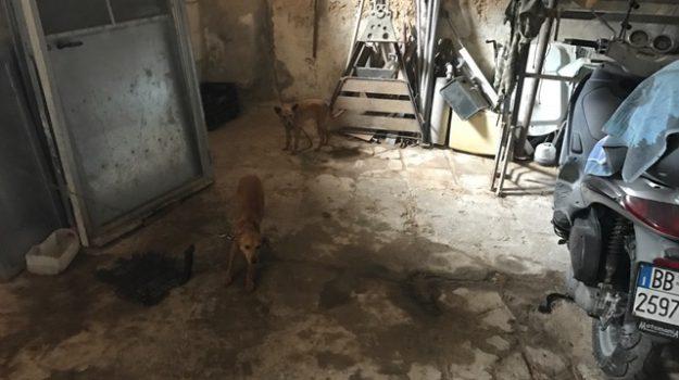 maltrattamento animali noto, Siracusa, Cronaca