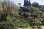 Kolymbethra, l'annuncio del Fai: «Campagna di scavi nel giardino»