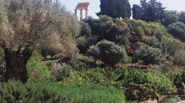 kolymbethra, Agrigento, Cultura