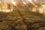 La piantagione di marijuana a Falsomiele a Palermo