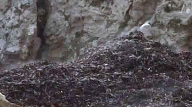 regione siciliana, rifiuti, Sicilia, Cronaca